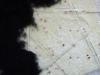 kap_konfetti_3-jpg