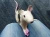 ratte_6