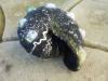 snail 02