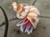 snail 03